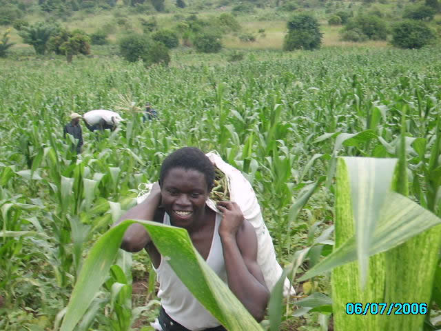 EWCV Staff Member Harvesting Beans
