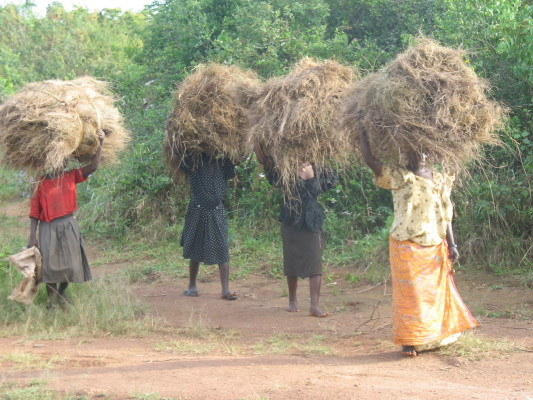 Ugandans Carrying Bundles of Grass for Thatching on their Heads