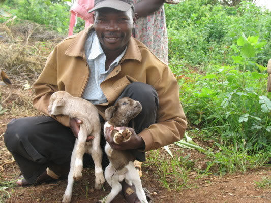 Farm Manager Holding New Baby Goats