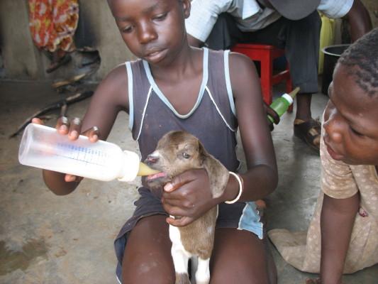 EWCV Girl Feeds Baby Goat from a Bottle