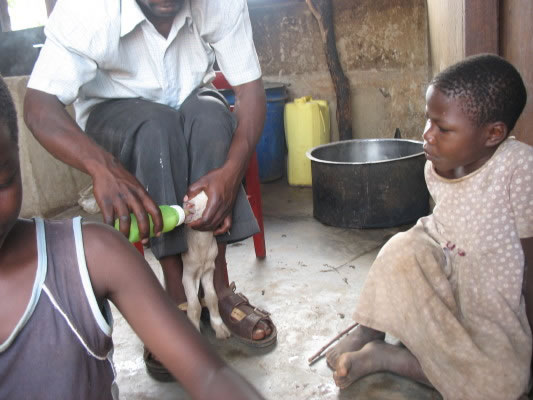 EWCV Girl Watches as Staff Member Feeds Baby Goat