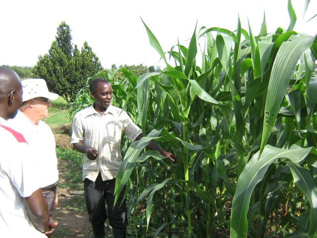 Farm Manager Showing Maize Crops to Bill