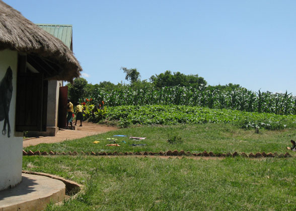 "Growing Maize and Beans Using ""Farming God's Way"" Method"